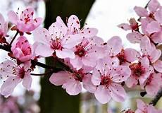 10 Bunga Tercantik Di Dunia Yang Paling Terpopuler