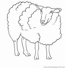 sheep images for drawing at getdrawings free