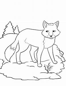 Arctic Fox Coloring Sheet Free Printable Fox Coloring Pages For