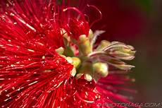 strange flowers photorasa free hd photos