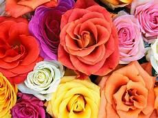 Gambar Bunga Mawar Ucapan Selamat Pagi Gambarrrrrrr