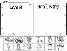 living or non living a pocket chart activity and worksheets by judy tedards