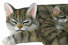 Malvorlage Katze Mit Jungen Casa Collection Katze Mit Jungen Liegend Norma F 252 R