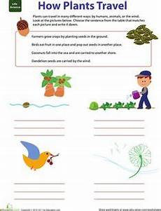 free plant worksheets 2nd grade 13733 1000 images about grade 7 unit b plants on photosynthesis worksheets and seed