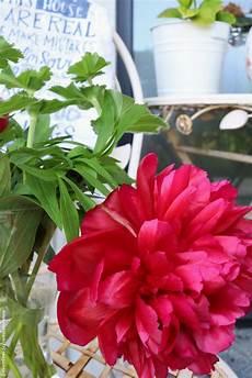was macht mit pfingstrosen nach der blüte friday flowerday mit pfingstrosen im roten schwedenhaus