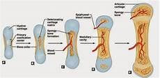 uteshiya medicare orthopedic implants manufacturer