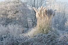 ein stauden winter gartentraum das gr 252 ne medienhaus