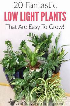 20 low light indoor plants that are easy to grow indoor vegetable gardening indoor plants low