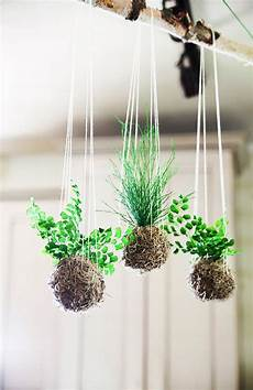 indooroutdoor hanging moss balls filled with plants this listing is for a set of 3 hanging kokedama string