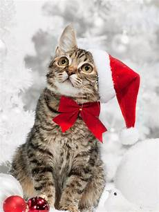merry christmas kitten images selected christmas excellent cakes merry christmas latest cat happy new year picture gallery2