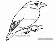 Kumpulan Koleksi Gambar Burung Kartun Hitam Putih Cikimm