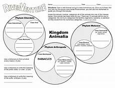 animal kingdom worksheets middle school 13932 kingdom animalia worksheet for 5th 8th grade lesson planet