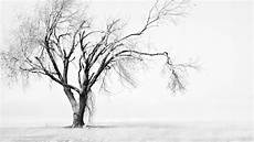 Wallpaper Trees Landscape Drawing Nature Snow