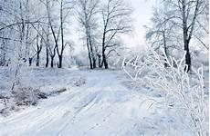 Photo Gratuite Neige Hiver Paysage Nature Gel Image