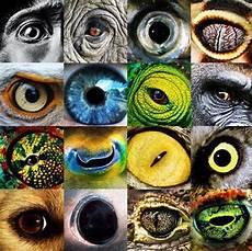 Ninjago Malvorlagen Augen Tier Tier Augen Augenkunst Zeichenvorlagen Natur Kunst