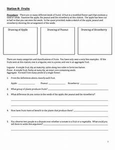 plant kingdom worksheets for grade 2 13758 plants diversity of the plant kingdom a living plant lab tpt
