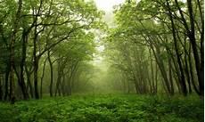 Hutan Terjaga Indonesia Lestari Muhammad Iqbal Rivai S