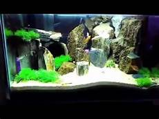 Tips Budidaya Ikan Hias Akuarium Terbaru