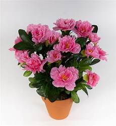 Ausmalbilder Blumen Im Topf Azalee 24cm Rosa Pink Im Topf La K 252 Nstliche Blumen