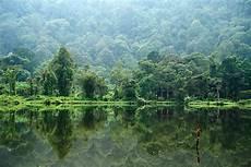 Mencintai Hutan Indonesia Sepenuh Hati