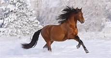 hintergrundbilder mit pferd im schnee hd hintergrundbilder