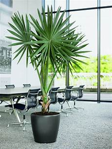 lechuza classico self watering planter metropolitan