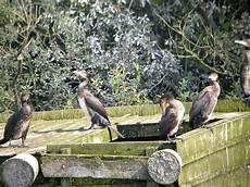 spa arras animaux refuges animaux nord pas de calais