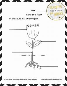 free printable worksheets on plants for grade 3 13687 parts of a plant worksheet for grade or three activity sheets with images parts of a