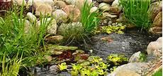 L Installation De Plantes Aquatiques Dans Un Bassin Aqua