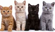 Kucing Dibakar Ganjaran Rm10 000 Jika Beri Maklumat Tepat