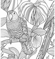 4201 zencolor ausmalvorlage papagei ausmalbuch fuer