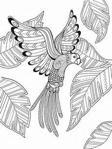 Ausmalbilder Erwachsene Vogel Pin Auf Ausmalen