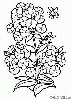 Blumen Malvorlagen Xl Malvorlagen Blumen
