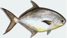 Prakarya Smp N 3 Binjai Nama Nama Ikan Yang Ada Di Laut