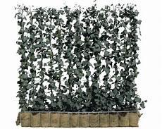 efeu hecke co sichtschutz im sichtschutz hecke efeu helix 120 x h 100 cm bei hornbach