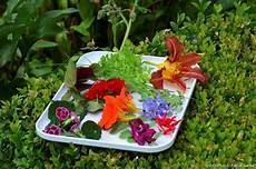 plantes par correspondance fleurs comestibles du jardin les cultiver et les manger i