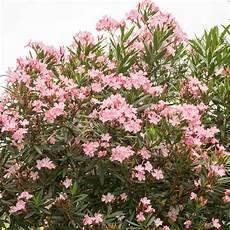 fleur exterieur sans entretien plante exterieur sans entretien pivoine etc