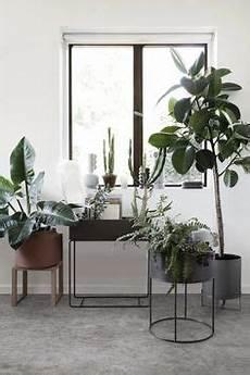 Pflanzen F 252 R Jeden Einrichtungsstil Wohnung Pflanzen