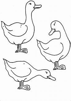 Lustige Enten Ausmalbilder Ausmalbilder Enten 05 Ausmalbilder Tiere