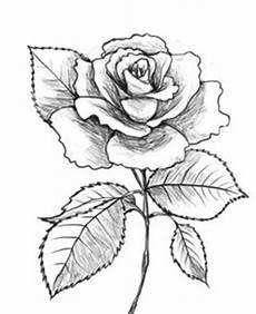 Sketsa Gambar Vas Bunga Dan Bunganya Free Photos