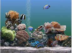 Razones por las que los peces son ?mascotas? muy tristes