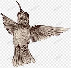 19 Gambar Burung Finix