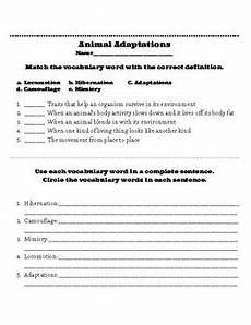 animal adaptations worksheets 2nd grade 13792 animal adaptations worksheet by lynde hutchins tpt