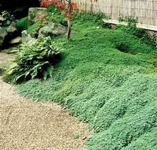 Jardins Japonais Id 233 Es D Am 233 Nagement Conseils Pr 233 Cieux