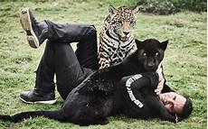black jaguar white tiger foundation volunteer black jaguar white tiger shop