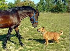 Malvorlage Pferd Und Hund Unterwegs Mit Hund Und Pferd Die Tier Welt