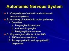 ppt autonomic nervous system powerpoint presentation id 870509