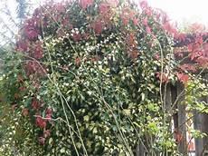 Plantes Grimpantes Sur Cl 244 Ture Humeur De Jardinier