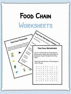 food chain facts worksheets species energy pdf resource