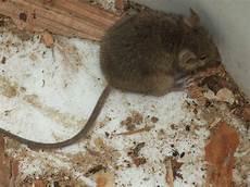 Maus Im Haus Fangen - maus im haus bad wildungen myheimat de